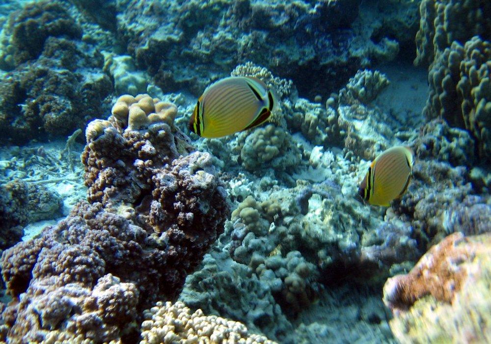 French polynesia for Bora bora fish