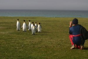 Kevin photographing King Penguins on Volunteer Beach
